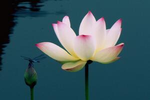 禅修是一场转变心态的旅程