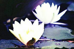 王维禅诗中的生态美