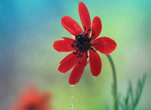 【禅悟人生】低头见花