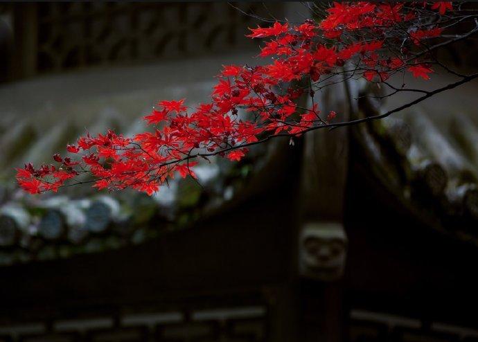 以四种环保,提升人的质量 禅修 菩萨 禅学 心灵 禅学  第1张