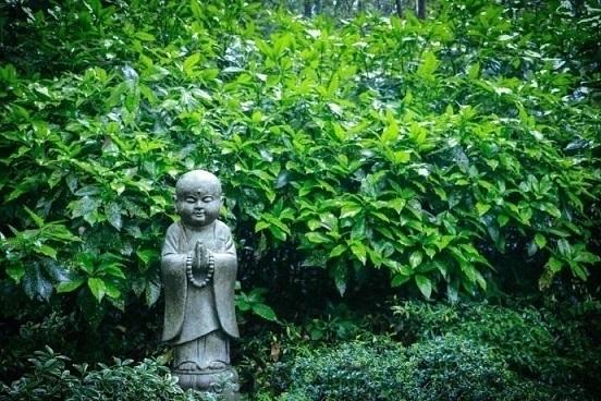 能够宽恕别人的过失,就是自己的为人处世荣耀 每日一善 经典 三国 宽容 禅文化 善念 宽恕 禅学  第1张